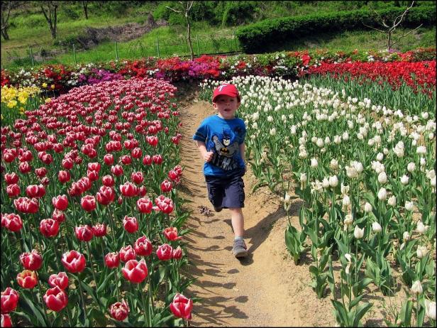 Tulip Time 018
