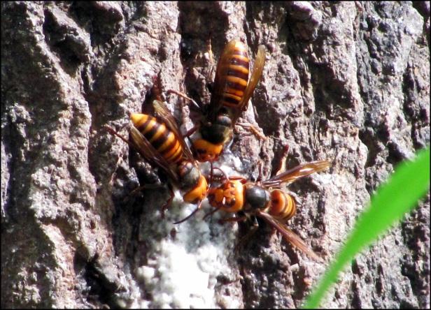 Big Beetle (12)