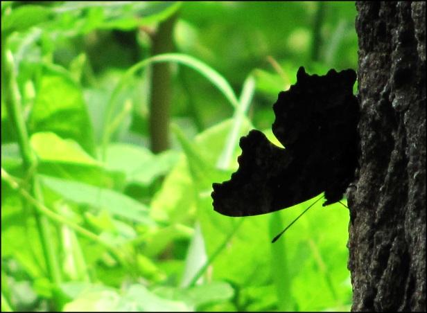 Big Beetle (20)